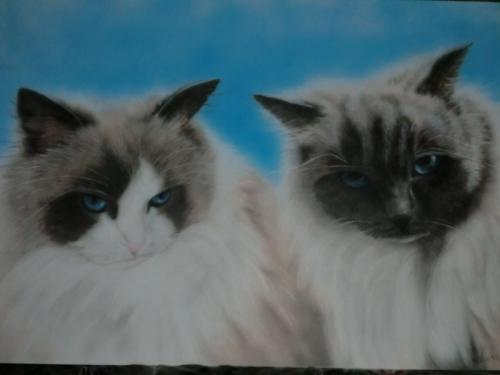 harrie potter en    de   katten anja 001